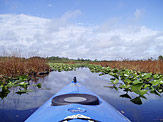 Kayaking the Okefenokee National Wildlife Refuge
